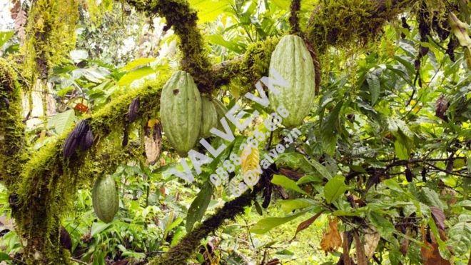 di-tim-loai-chocolate-ngon-nhat-the-gioi-1